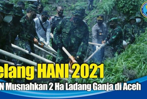 Kepala BNN RI Pimpin Pemusnahan Ladang Ganja di Aceh